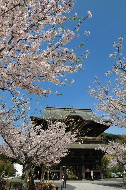 20100406_kenchoji2