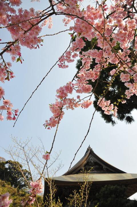 20100406_kenchoji4
