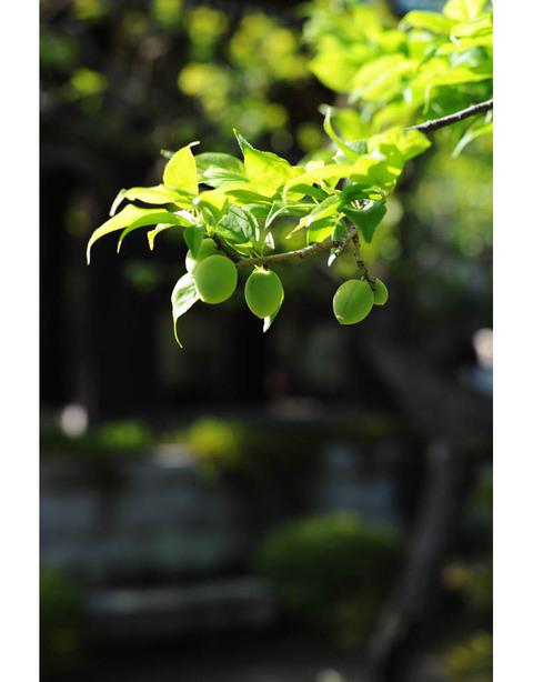 20100429_kaizoji2_2