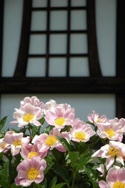 20100515_ryuhoji2