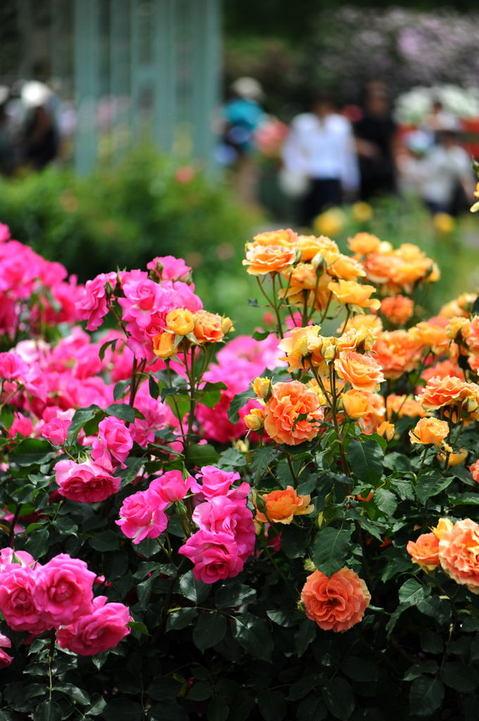 20100522_flowercenter2