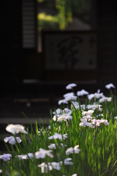 20100612_kaizoji3