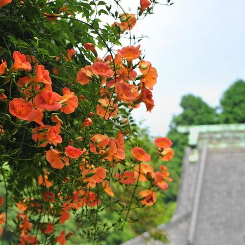 20100706_myohonji1