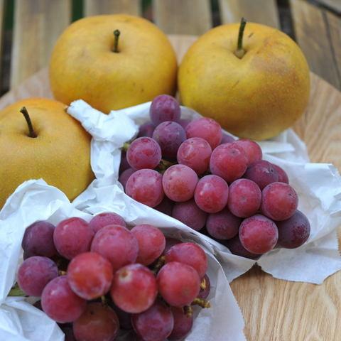 20100829_fruit1