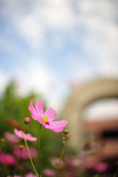 20101016_flowercenter2