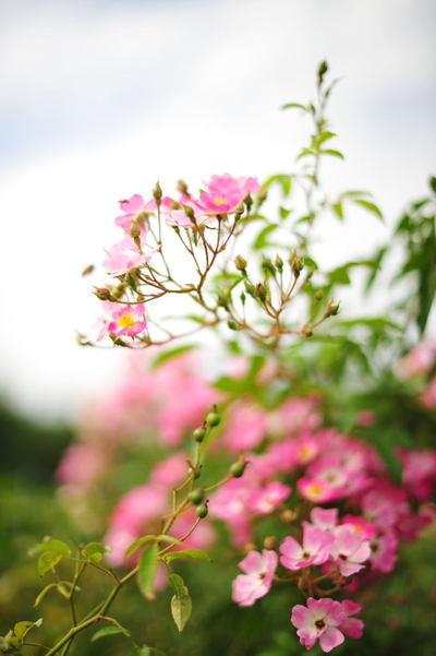 20101016_flowercenter4