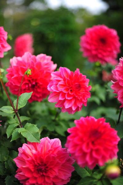 20101016_flowercenter6