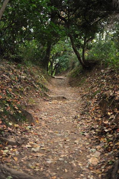 20101114_hiking2_2
