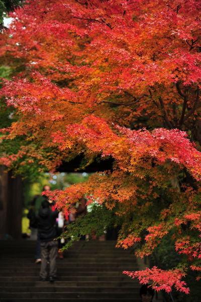 20101123_engakuji2_2