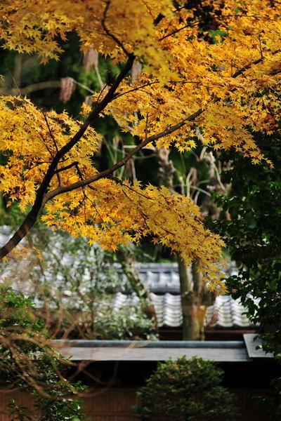 20101123_zuisenji2