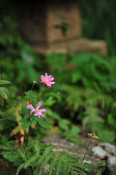 20101123_zuisenji4