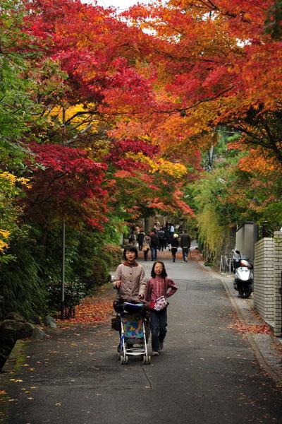 20101123_kaizoji2