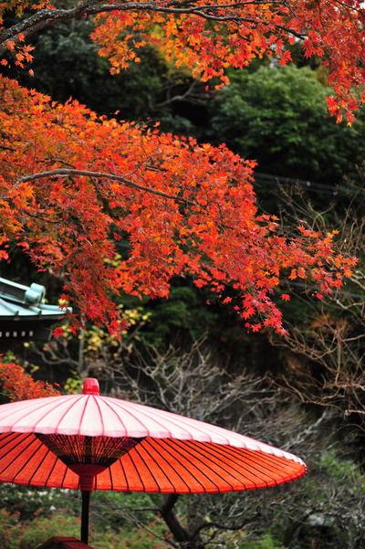 20101123_kaizoji4