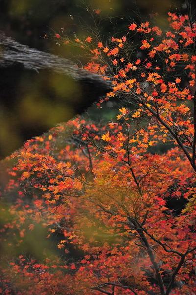 20101123_kaizoji5