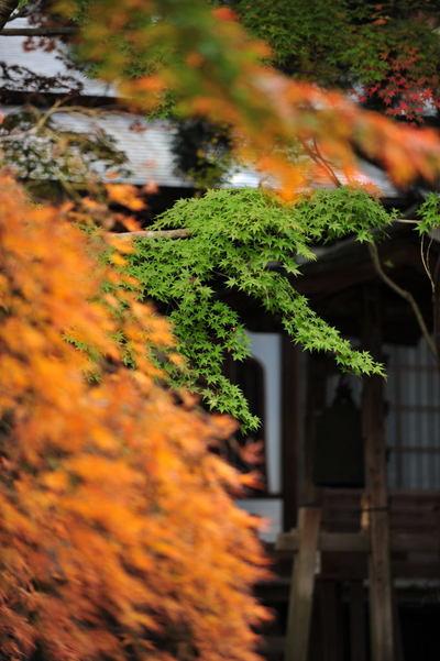 20101123_kakuonji2