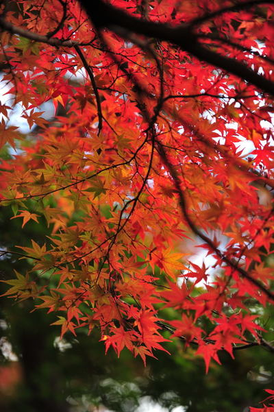 20101123_kakuonji3