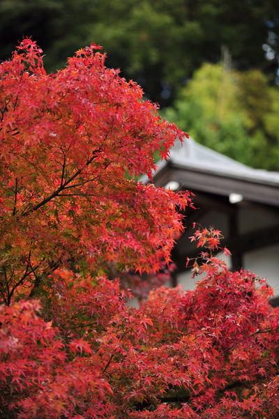 20101123_kakuonji4
