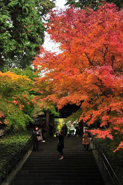 20101126_engakuji2