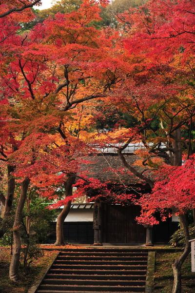 20101126_engakuji4