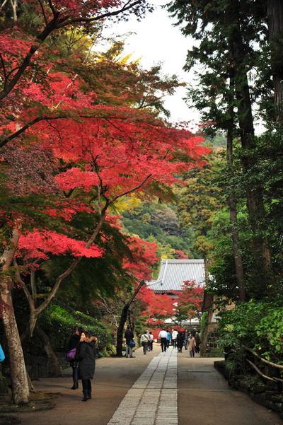 20101126_engakuji5