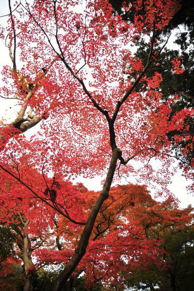 20101126_engakuji6