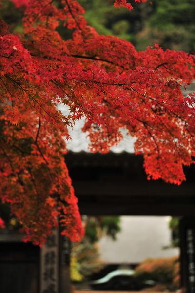 20101126_engakuji7