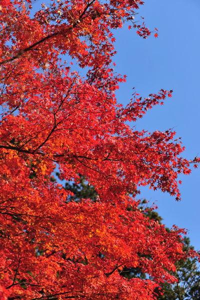 20101128_engakuji4_2