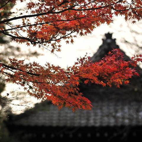 20101128_myohonji1