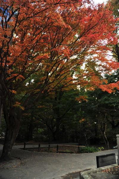 20101128_myohonji2