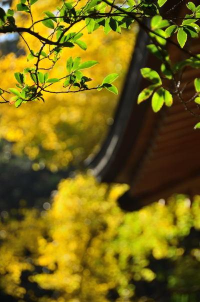 20101205_kumano3