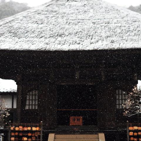 20110211_engakuji1