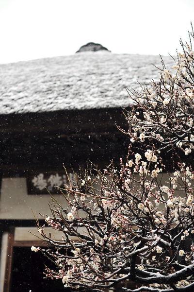20110211_engakuji10