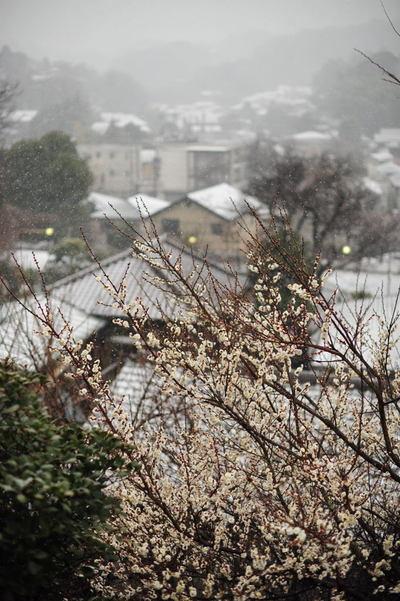 20110211_engakuji2