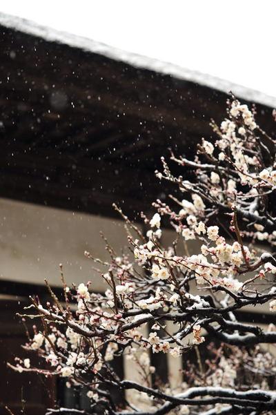 20110211_engakuji4