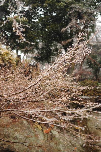 20110211_engakuji6