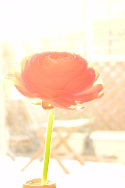 20110331_flower