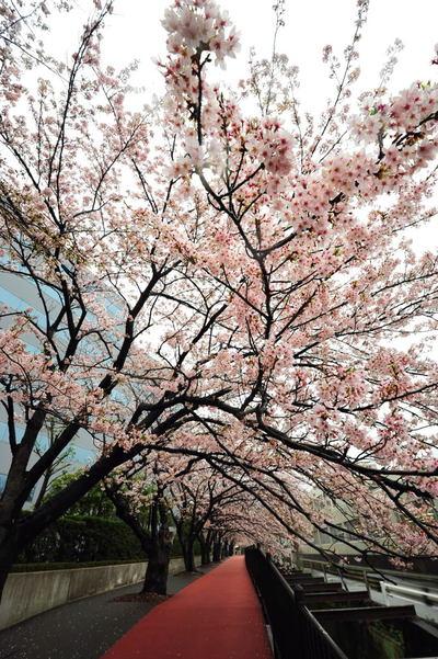 20110409_sunaoshi3