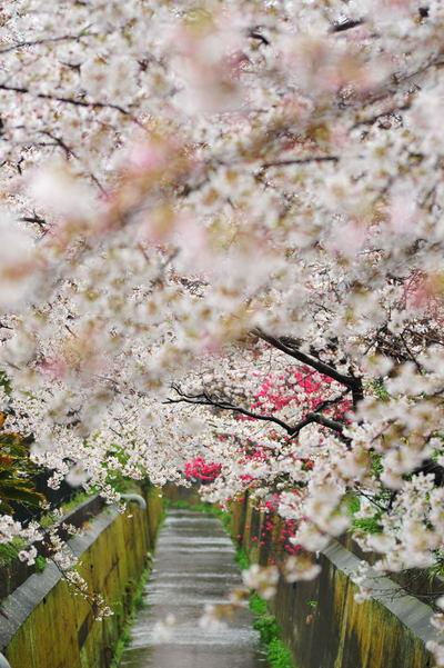 20110409_sunaoshi4