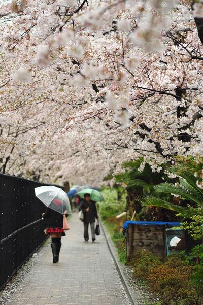 20110409_sunaoshi6
