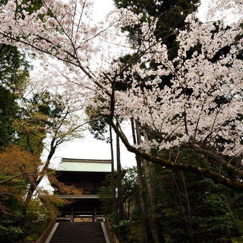 20110410_engakuji1