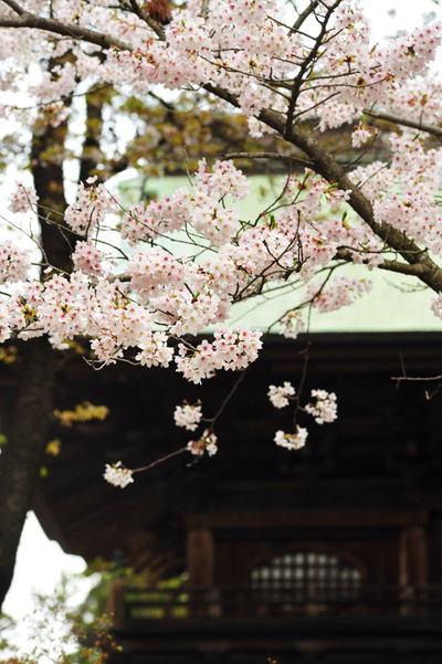 20110410_engakuji5