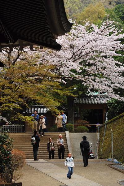 20110410_engakuji6