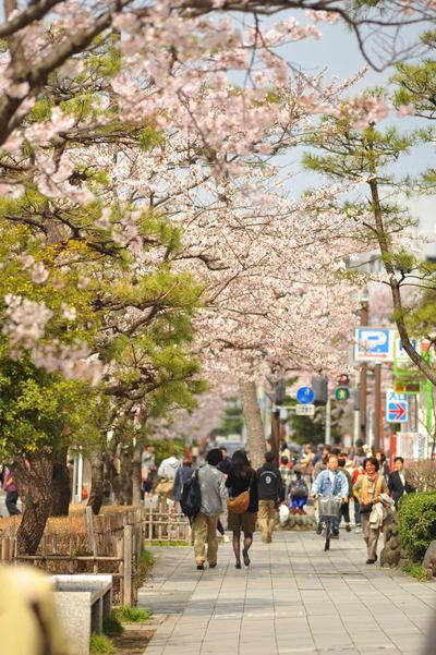 20110410_dankadura2
