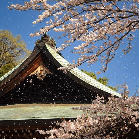 20110413_hokokuji1