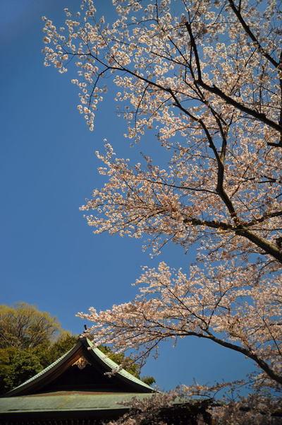 20110413_hokokuji3
