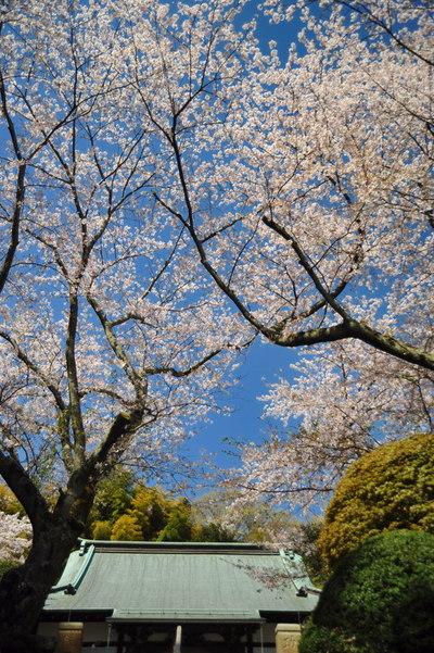 20110413_hokokuji6