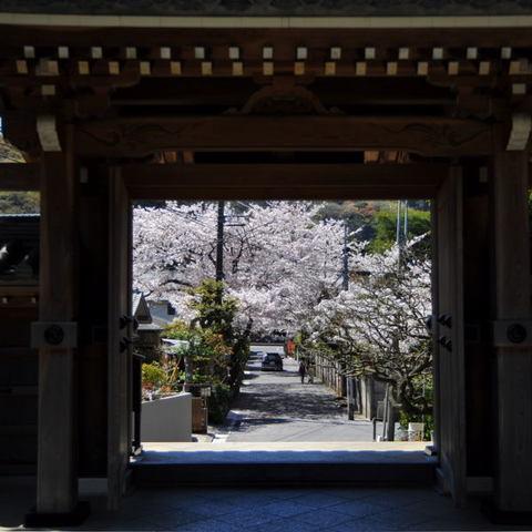 20110413_jomyoji1