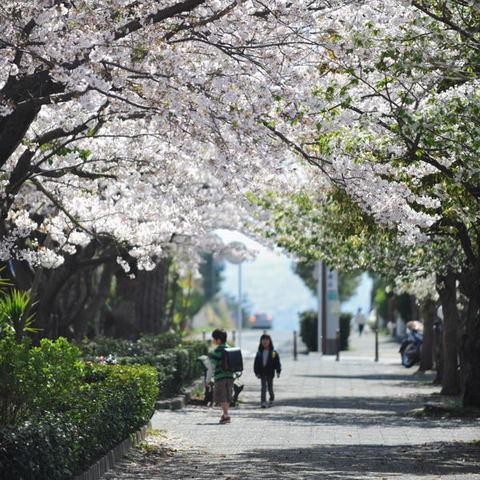 20110413_shichirigahama1