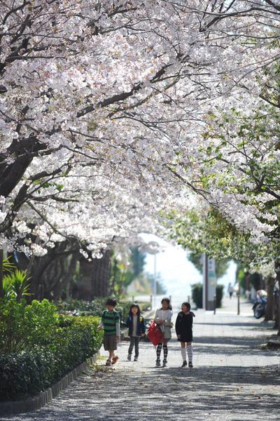 20110413_shichirigahama2