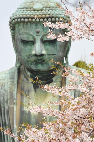 20110416_daibutsu3